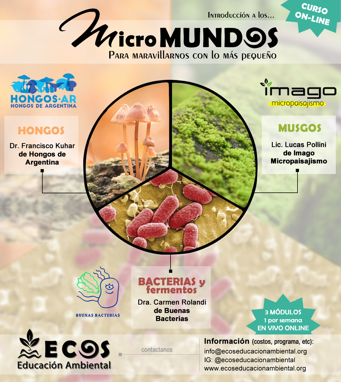 #especializaciones-online